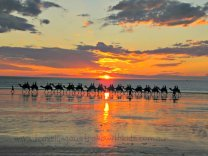 Camels Cable Beach