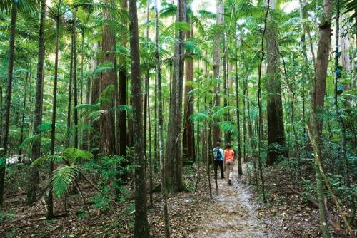 Pile Valley Fraser Island