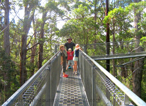 Walpole Tree Top Walk